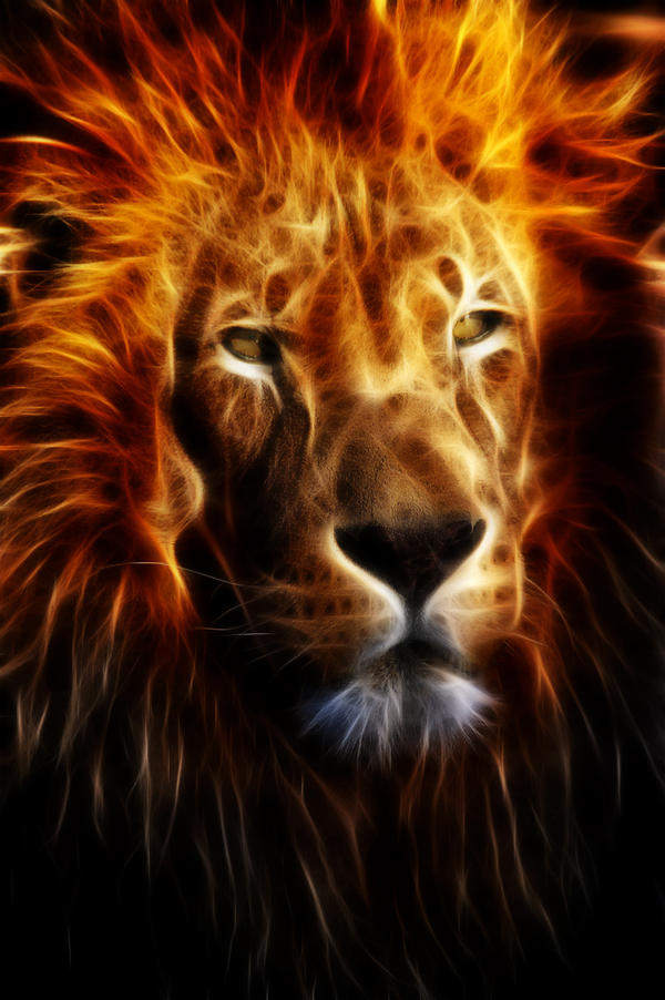 Lion Fire by mceric on DeviantArt