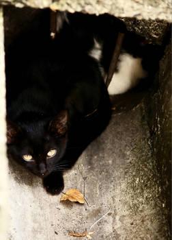 Kitties in the drain