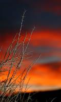 Sunset Thorns_0179