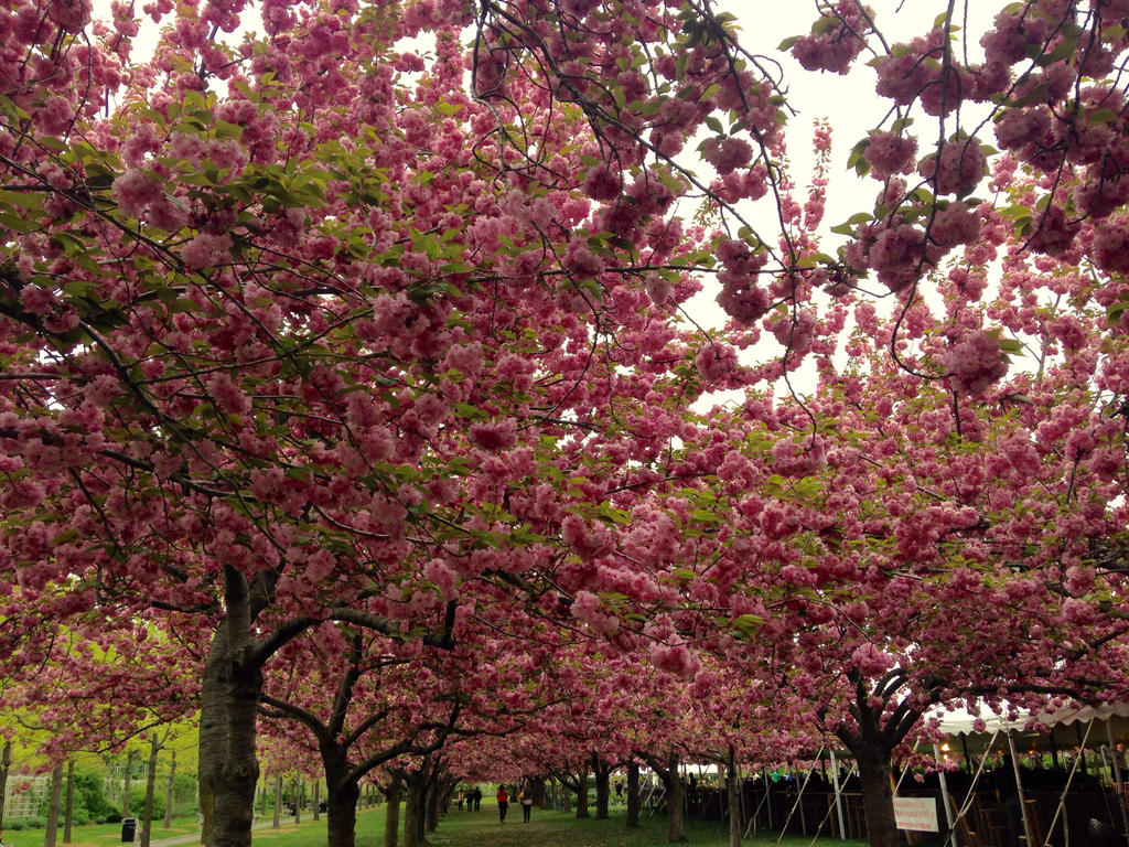 Cherry Paradise by shadowseyez