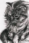 Kitten by Rhyn-Art