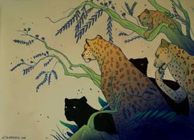 Five Leopards