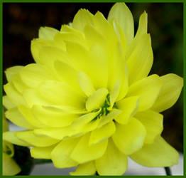 Little Yellow by glykeria