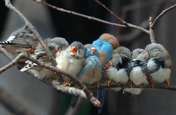 Cold Bird's by TrinityItachi