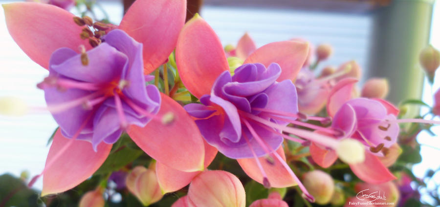 Course of light by FairyFunny