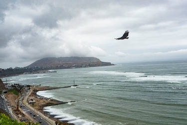 Lima, bird and beach.
