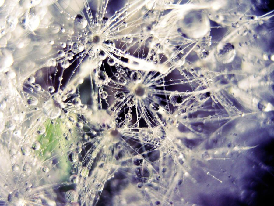 Dewdrop Dandelion by Annas-Day-Dreams