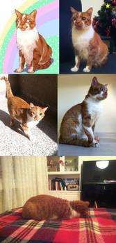 Solun the blind cat - photos