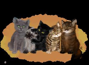 PET commission4