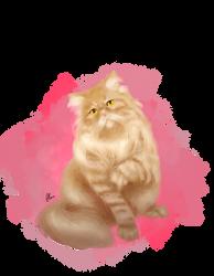 PET commission5