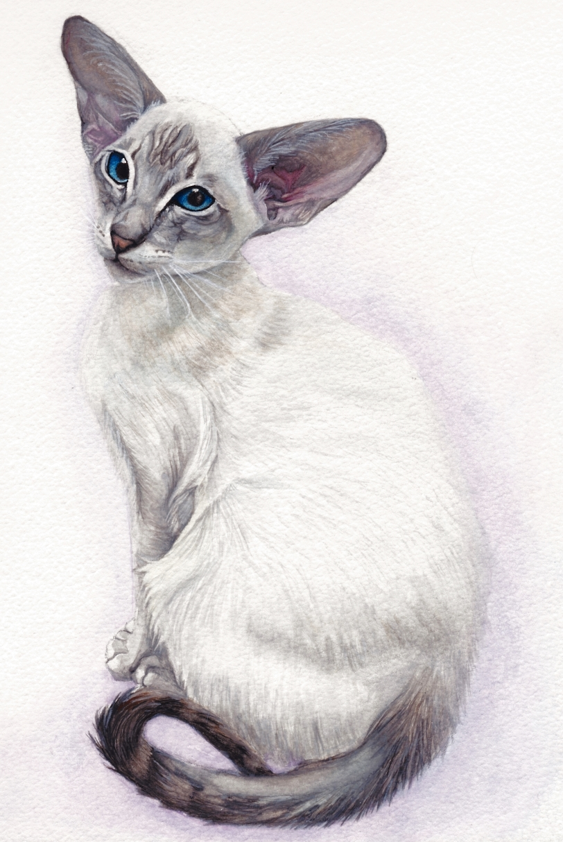 Siamese cat painting by feline sapien on deviantart for Cat paintings on canvas