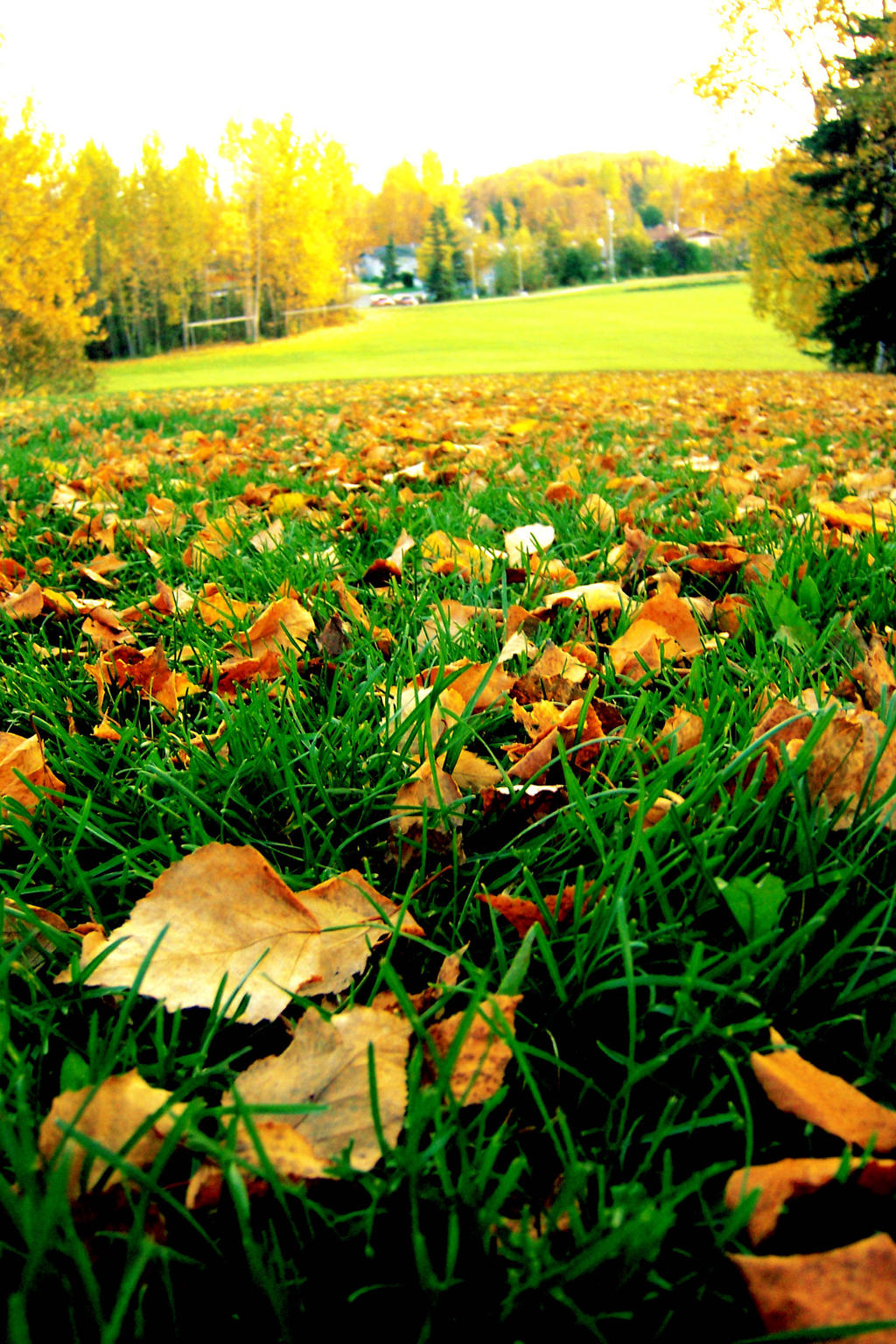 Brown Leaves In Green Grass