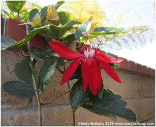 Red flower by zorichan