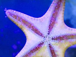 starfish by adnamaleo