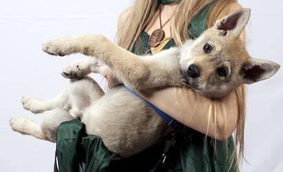Little Direwolf -  Czechoslovakian Wolfdog Harren by PrincessAndDragon