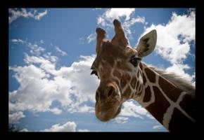 Giraffe. by feudal89
