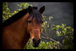 Horse II.