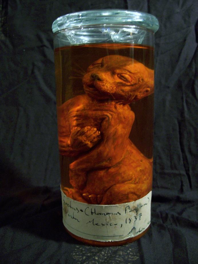 Werejaguar fetus