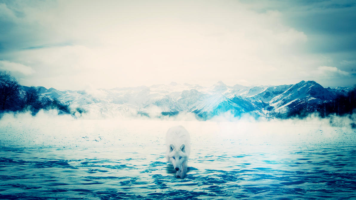 Artic Wolf by Vifram