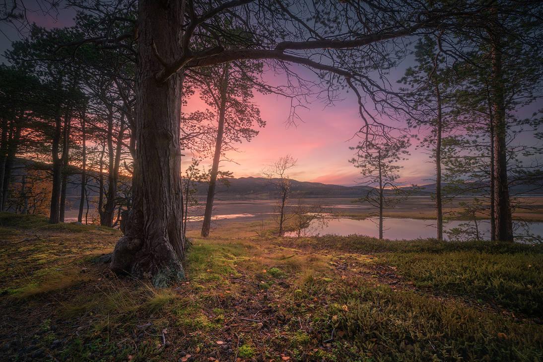 To the horizon by Trichardsen