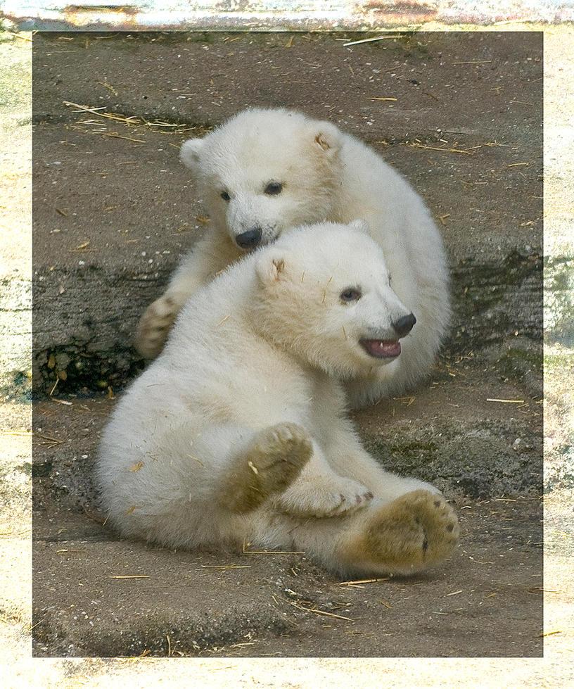 2 Polar bear Babys by miezbiez