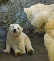 polar bear baby by miezbiez