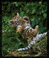 little tiger cub by miezbiez