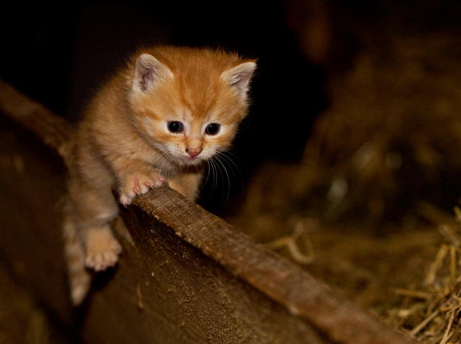 balancing kitten by miezbiez