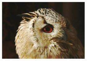 owl by miezbiez
