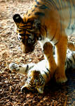 tigerbaby playing with mum