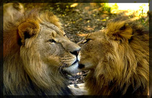 the 2 lions