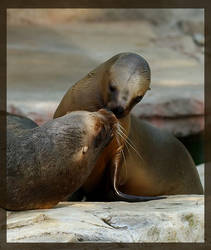 Kiss me by miezbiez