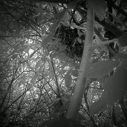 Vintage Monochrome Birds Nest