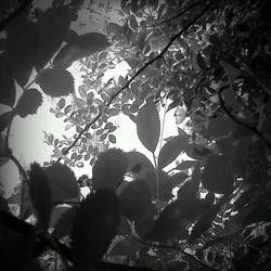 Monochrome View from Below