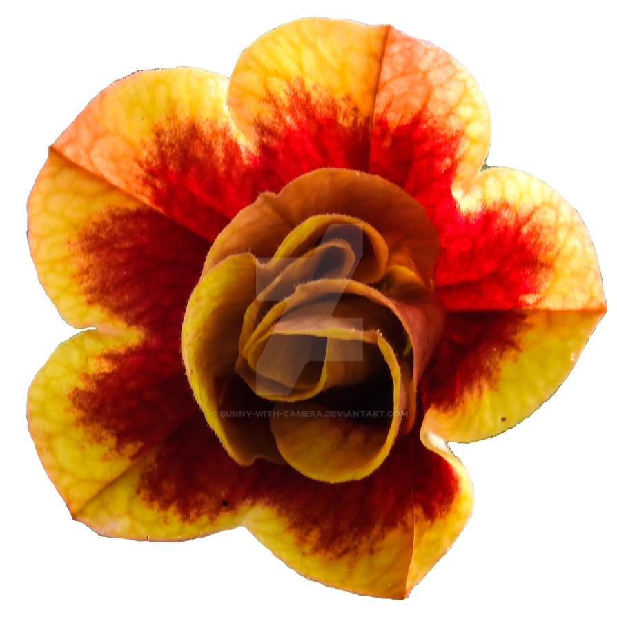 Yellow And Red Flower Png By Bunny With Camera On Deviantart