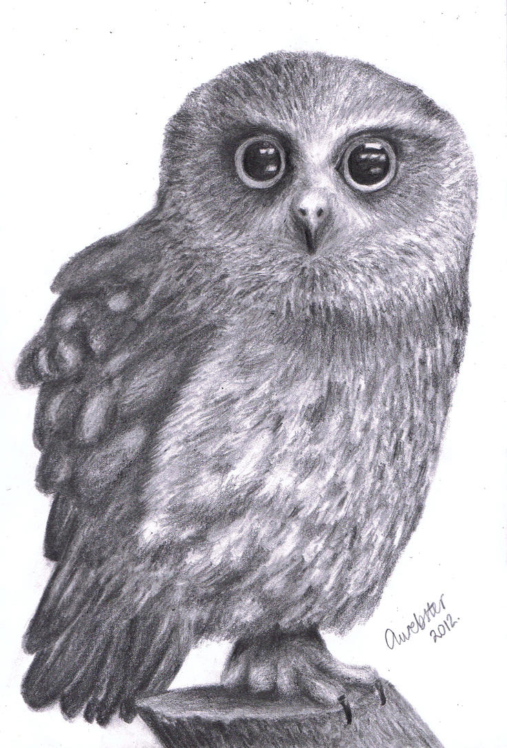 Realistic owl by annokat on deviantart for Cool drawings of owls