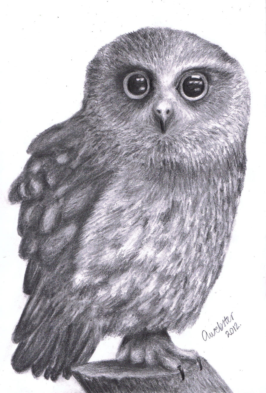 how to draw a realistic owl head