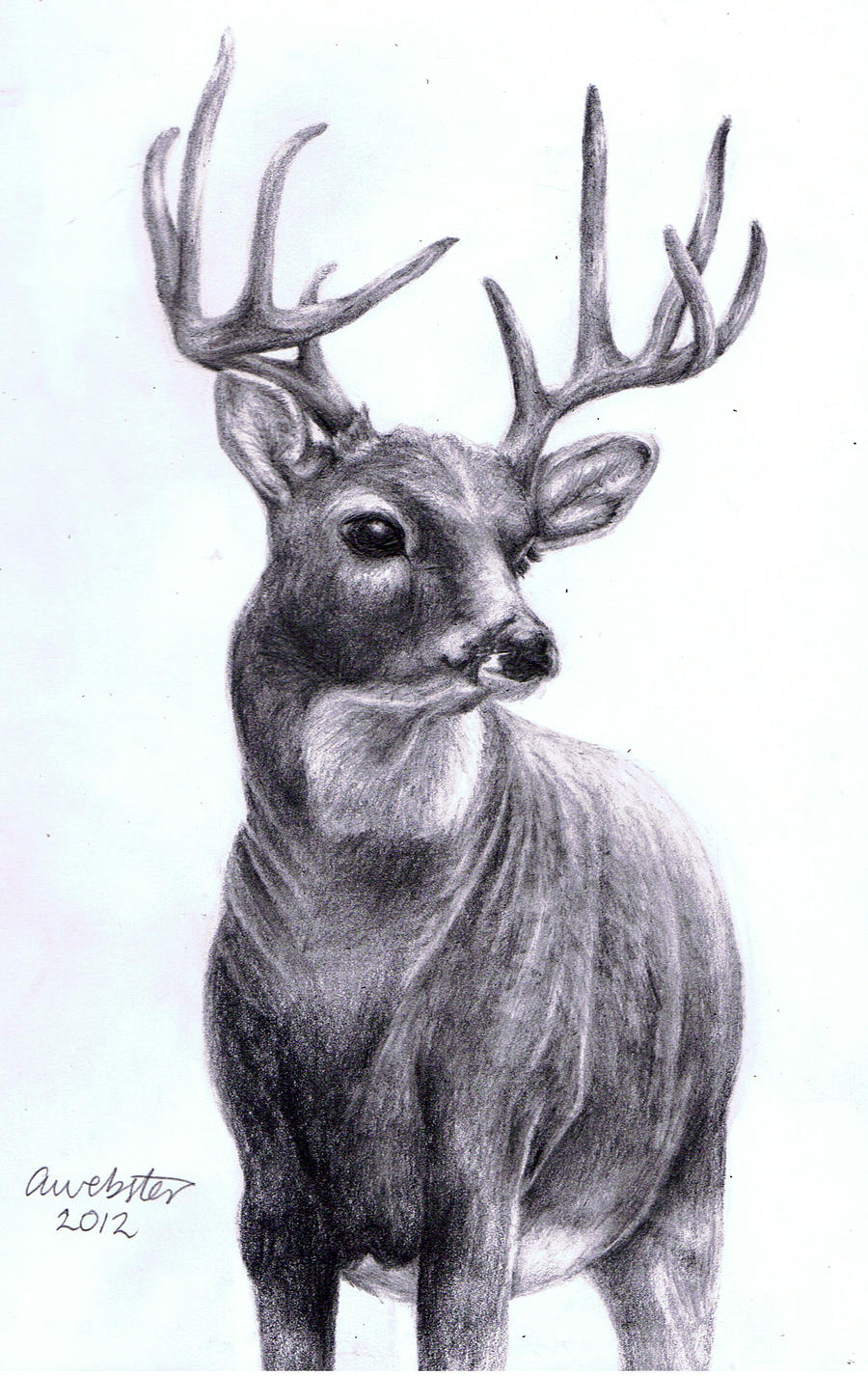 deer drawings - photo #24