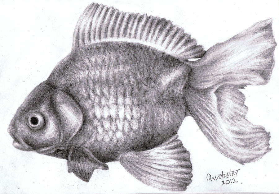 It's just an image of Inventive Realistic Fish Drawing