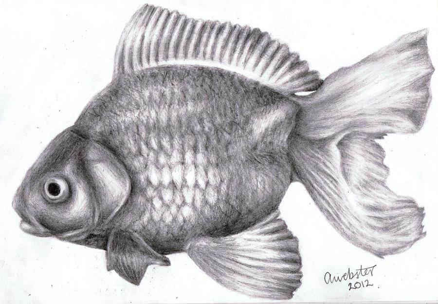 Realistic Fish By AnnoKat On DeviantArt