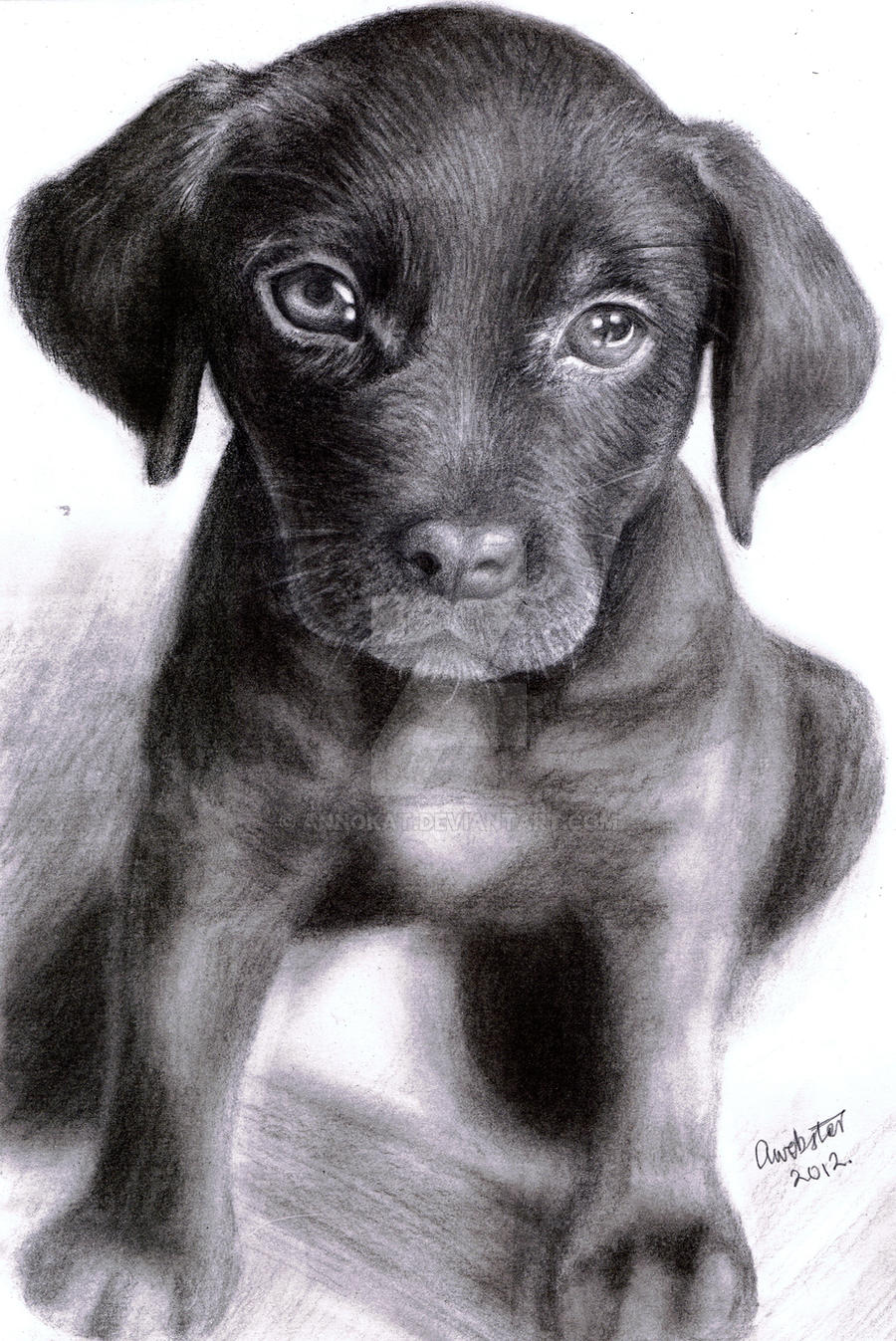 Labrador Puppy by annoKat
