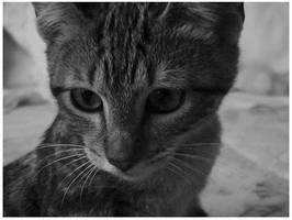 Gato by Miauu