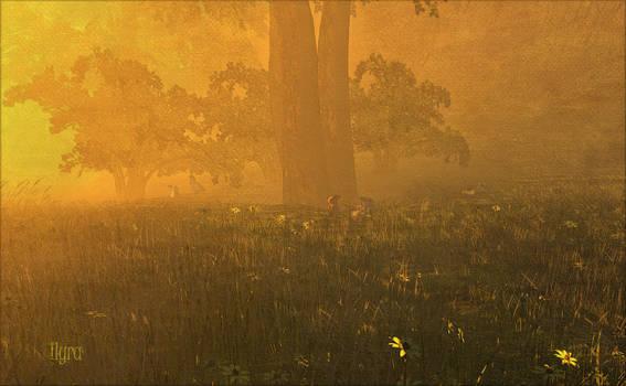 Enchanted Glade