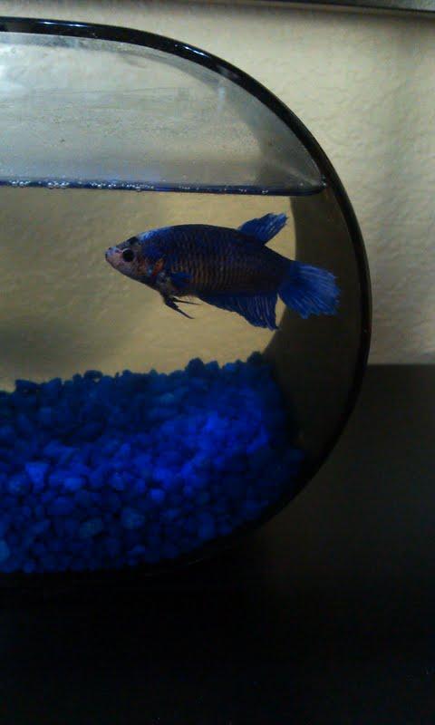 Cutie my pet fish by monica52404