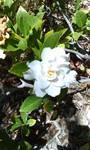 Lovely Flower by monica52404