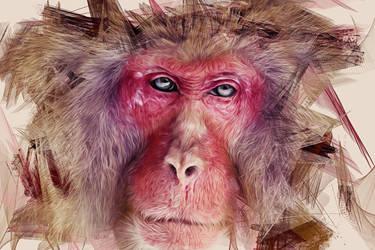 Colorful Monkey