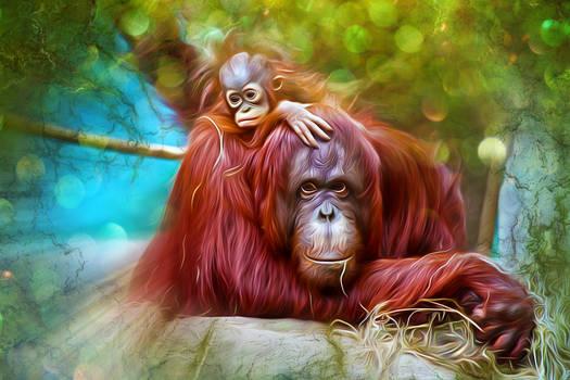 Orangutans Color