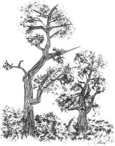Tree Study by kaze-ranna