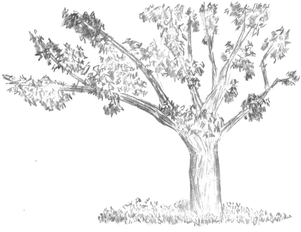 Tree in Tompkins Square Park by kaze-ranna