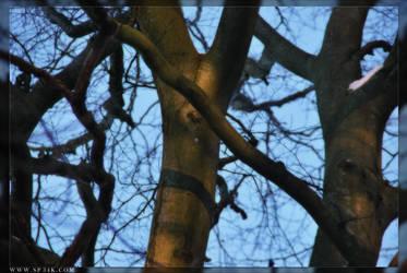 Tree by 5p34k